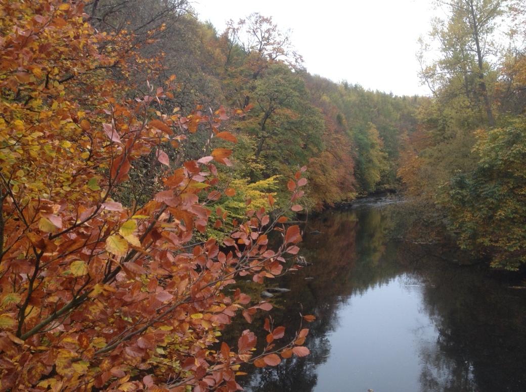 River_Almond